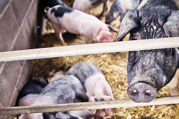 Animal feeding, Cardiff