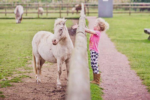 Farm animals, Cardiff